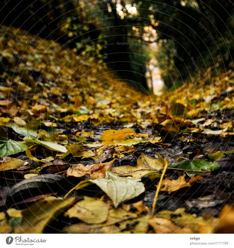 Tree Green Leaf Yellow Autumn Lanes & trails Earth Floor covering Autumnal Golden section