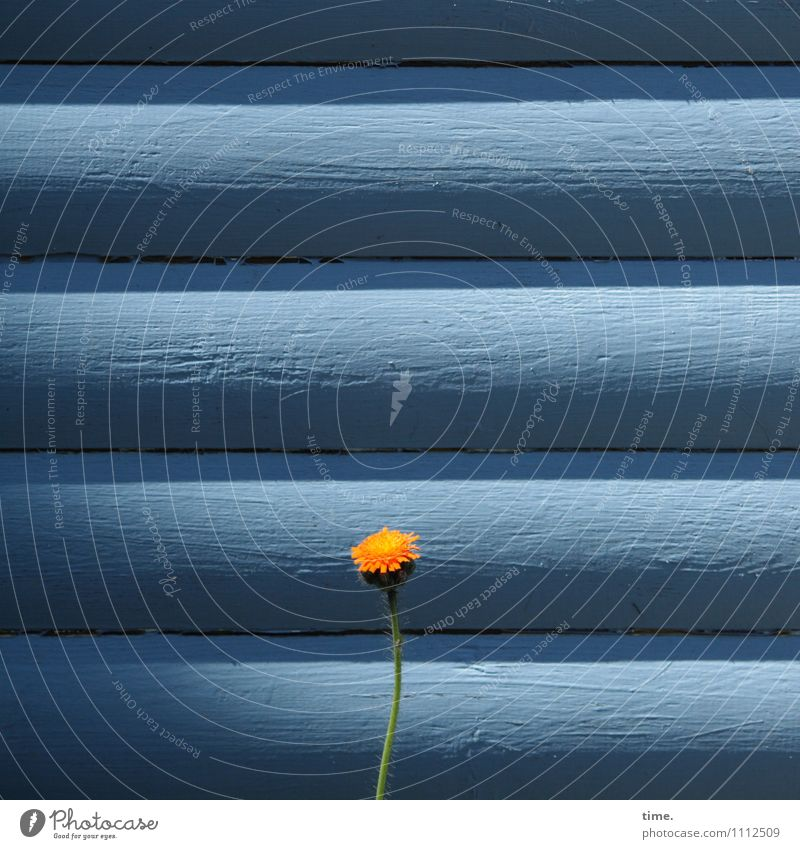 Nature Plant Loneliness Flower Life Wall (building) Wall (barrier) Small Bright Growth Stand Happiness Esthetic Creativity Beautiful weather Might