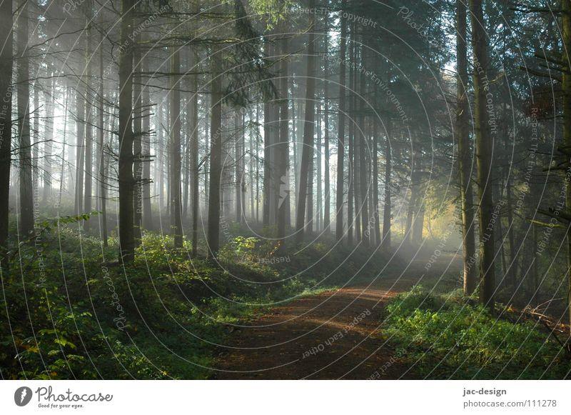 the sun penetrates the fog Fog Morning fog Forest November Calm Autumn November Nebula Weather Forest rest'