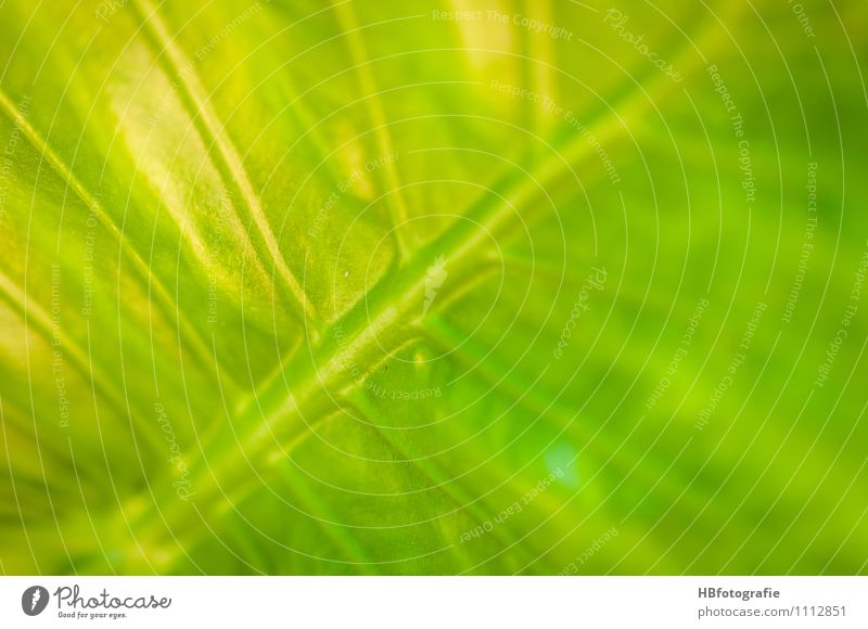 leaf structure Vacation & Travel Ocean Island Nature Plant Leaf Exotic Yellow Gray Dream Part of the plant Rachis Colour photo Close-up Detail