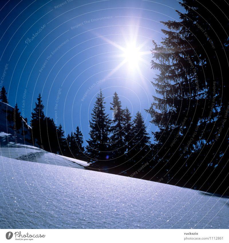 Blue Sun Winter Cold Mountain Frost Alps Fir tree Austria Blue sky Express train Federal State of Tyrol Hoar frost Impression Snowdrift Winter sun