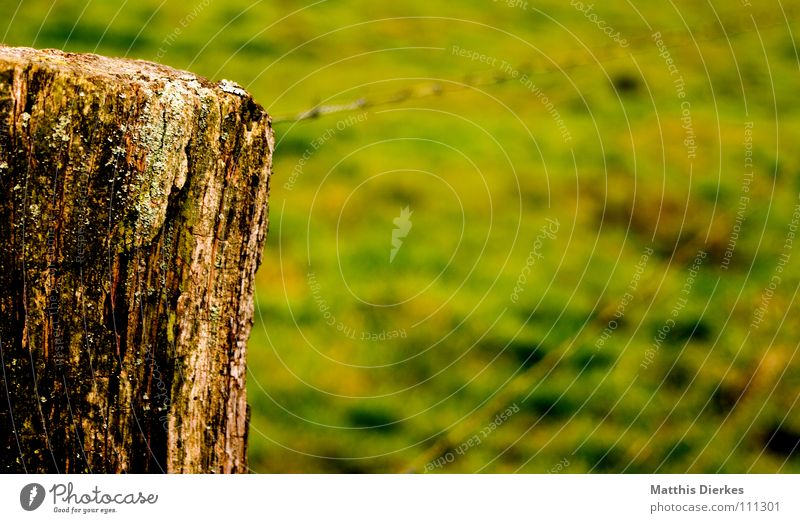 zaungast Fence Wire Barbed wire Tree trunk Barrier Blur Autumn Diagonal Wiry Dangerous Closed Bans Captured Confine Agriculture Field Meadow Dark Gloomy Grief