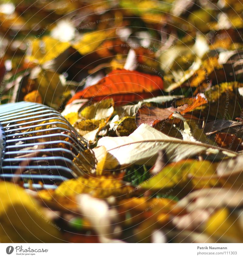 typical autumn work... Autumn Leaf Tree Rake Work and employment Multicoloured Physics Loneliness Wood Wood flour Autumnal foliage wet leaves Warmth Windfall