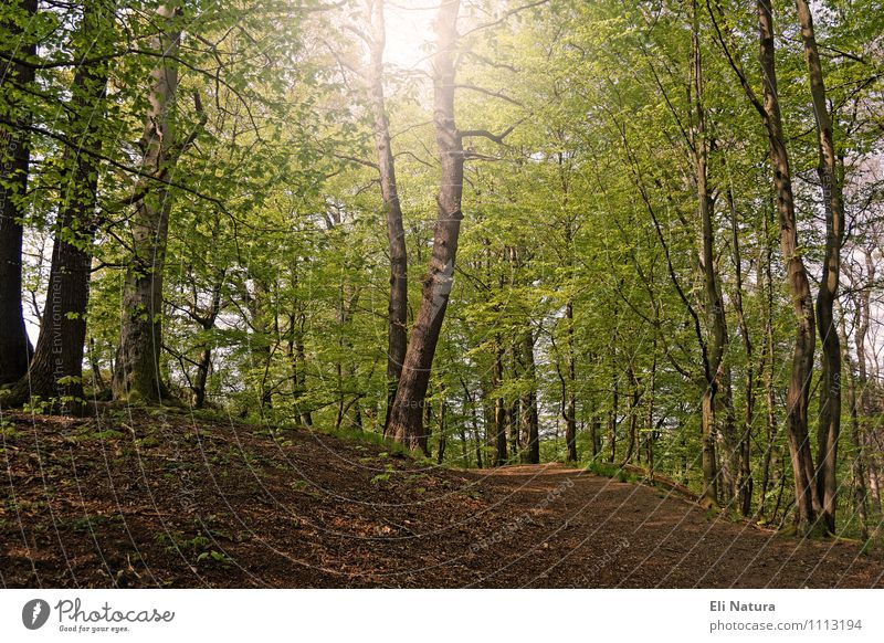Nature Plant Green White Summer Tree Leaf Landscape Animal Forest Environment Yellow Warmth Wood Brown Earth