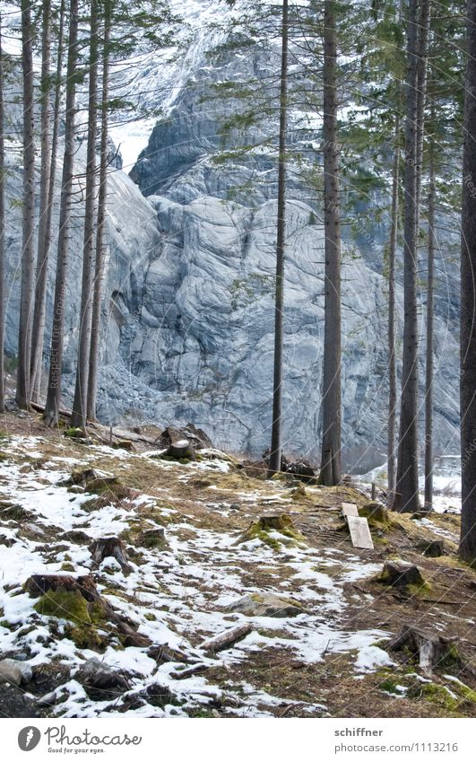 Gewaldig rocky Snow Tree Rock Alps Mountain Cold Fir tree Pine Forest Woodground Clearing Edge of the forest Winter Wall of rock Massive Rock formation Glacier