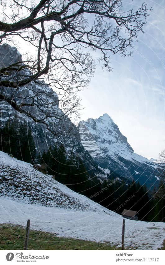 Actually Eiger Environment Nature Landscape Climate Climate change Beautiful weather Rock Alps Mountain Peak Snowcapped peak Glacier Cold Tree Meadow