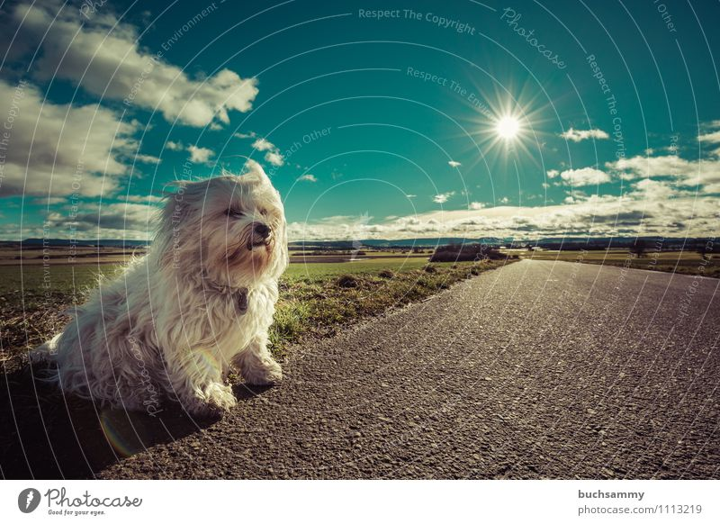 Dog Nature Blue Green White Sun Clouds Animal Street Small Pelt Pet Long-haired Mammal Watchdog