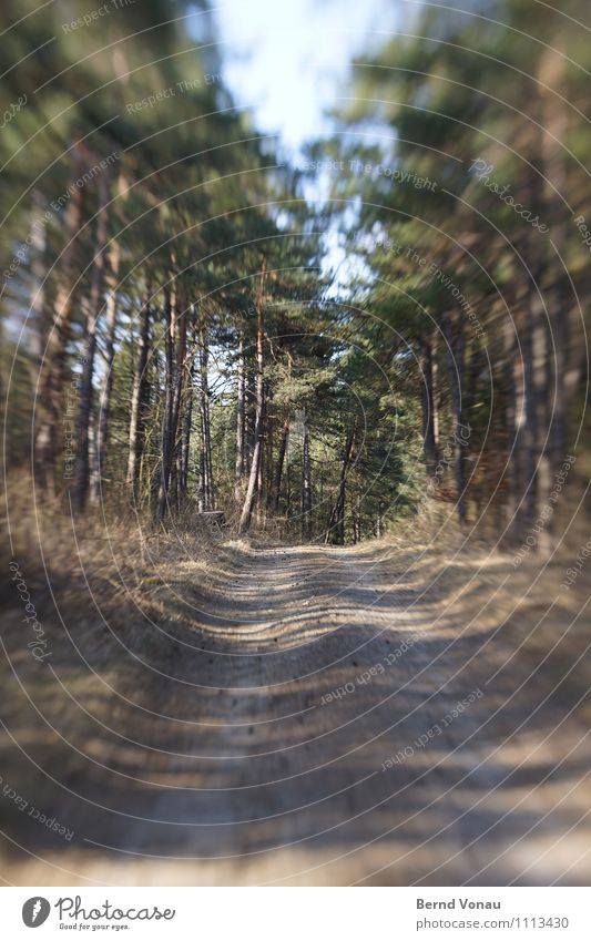 There's Lenz, baby! Environment Nature Plant Tree Grass Forest Blue Brown Gray Green Footpath Lens Tilt-Shift Tunnel vision Dynamics Direction Speed Speed rush