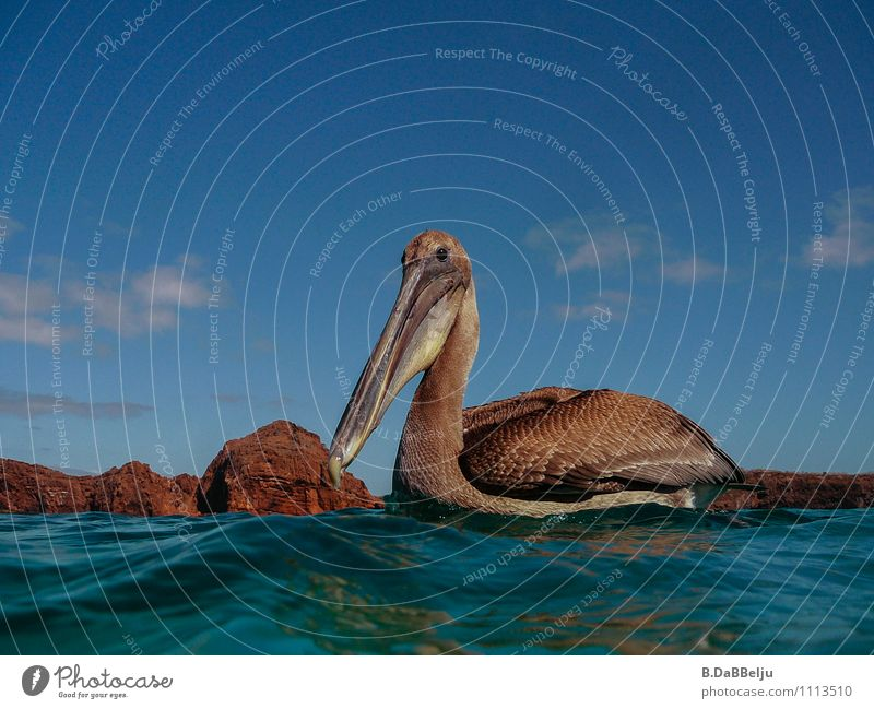 You here? Ocean Environment Nature Animal Wild animal Bird 1 Curiosity Galapagos islands Pelican Colour photo Exterior shot Day Animal portrait