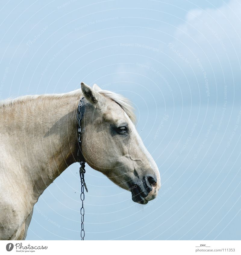 Sky Blue Clouds Animal Yellow Horse