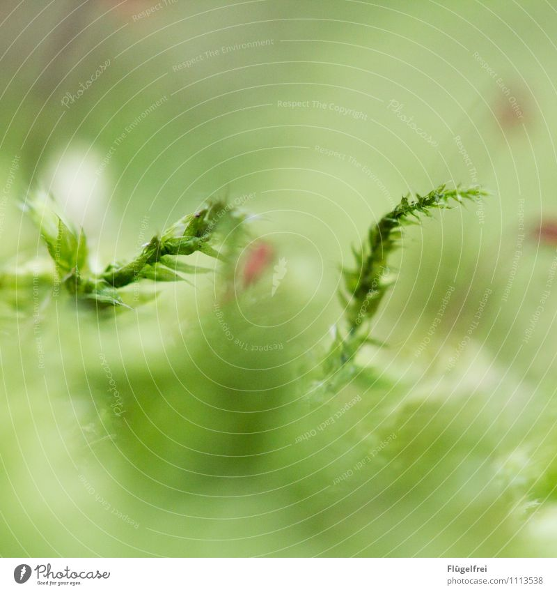 Nature Plant Green Leaf Forest Environment Life Spring Growth Moss