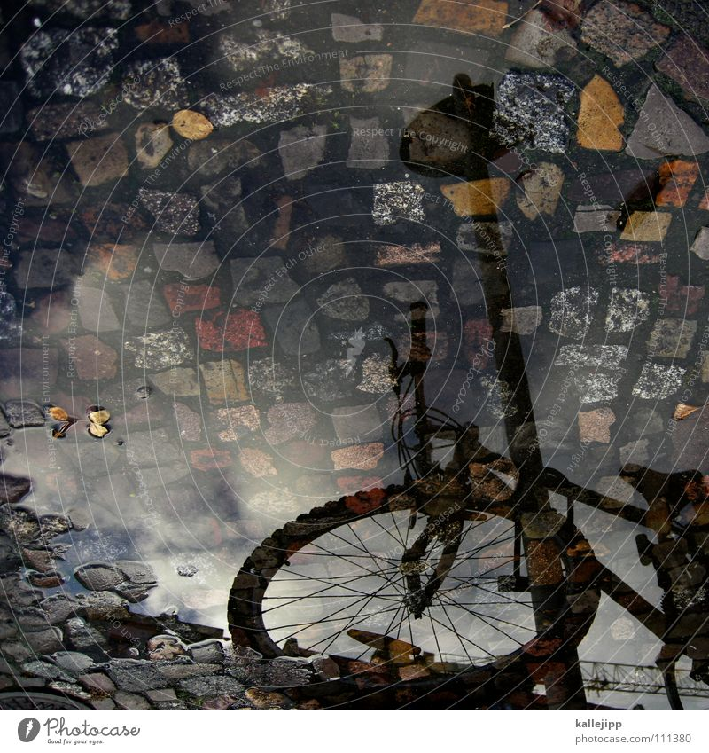 Old love doesn't rust Puddle Bicycle Logistics Mountain bike Motorcyclist Lantern Autumn Coat Reflection House (Residential Structure) Flat (apartment) Tenant
