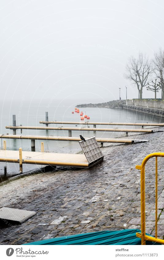jetties Spring Autumn Bad weather Rain Tree Navigation Boating trip Harbour Gloomy Raven birds Lake Geneva Lausanne Footbridge Lakeside Jetty Colour photo