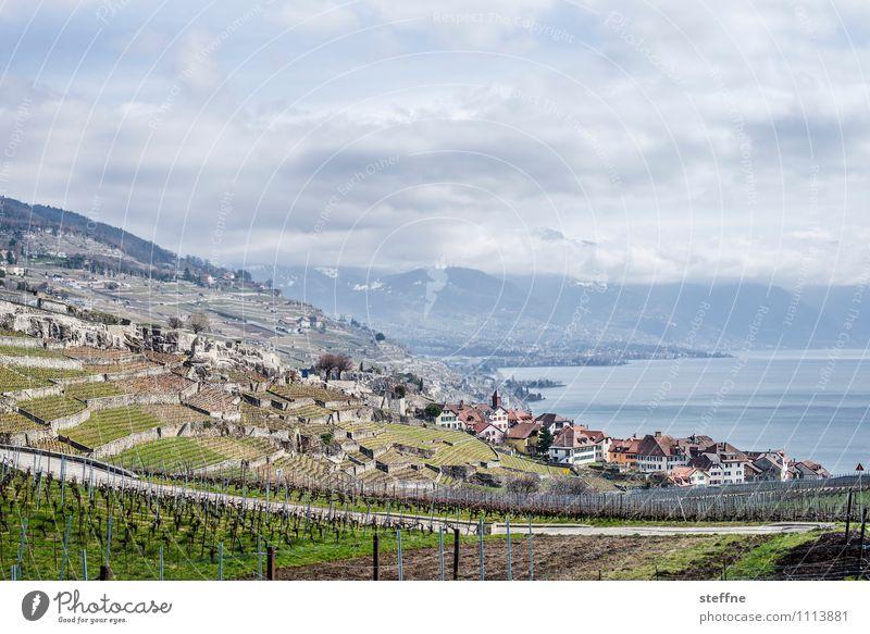 Chexbres Landscape Clouds Mountain Lakeside chexbres Lausanne Switzerland Village Tourism Wine growing Vineyard Lake Geneva Lac Lemon Alps Colour photo