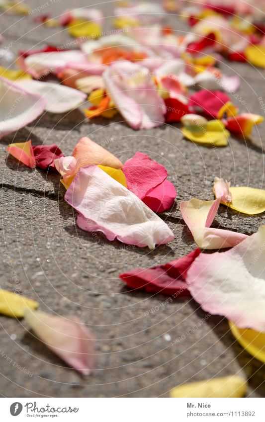 Remains of the festival Lifestyle Joy Happy Wedding Plant Flower Leaf Yellow Pink Red Romance Distribute Floor covering Blossom leave Wedding ceremony Tradition