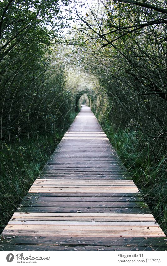 BridgeWay Nature Summer Beautiful weather Plant Tree Grass Bushes Foliage plant Wild plant Park Forest Bright Long Natural Positive Green Power Willpower Trust