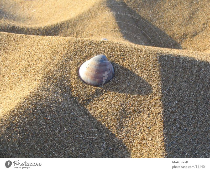 Star in the sand Beach Mussel Ocean Lake Summer Coast Sand Star (Symbol)
