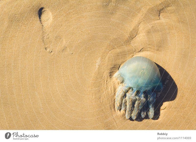 Buffing Wheel II Nature Sand Coast Lakeside Beach Bay Ocean Pacific Ocean Pacific beach Island Jellyfish 1 Animal Lie Blue Relaxation Vacation & Travel Death