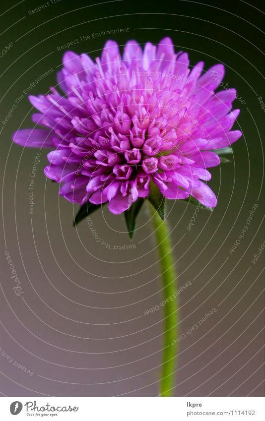 violet flower Garden Nature Flower Leaf Blossoming Brown Green Red Black Pollen pistil Blossom leave spring stem Close-up Macro (Extreme close-up)
