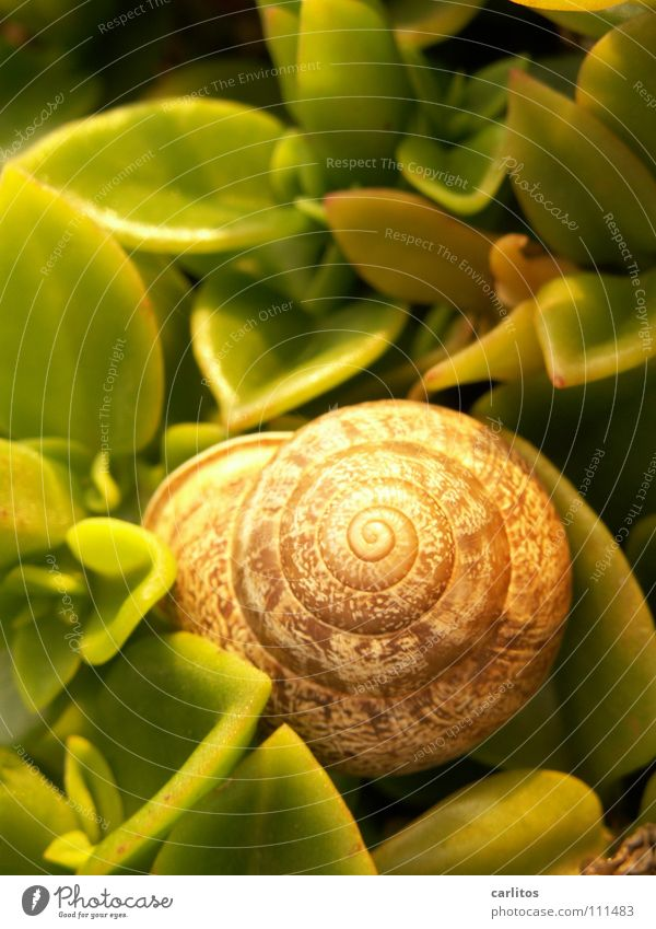 Loneliness Animal Line Painting and drawing (object) Snail Gourmet Snail shell Withdraw Cookbook Hermit Succulent plants Concentric