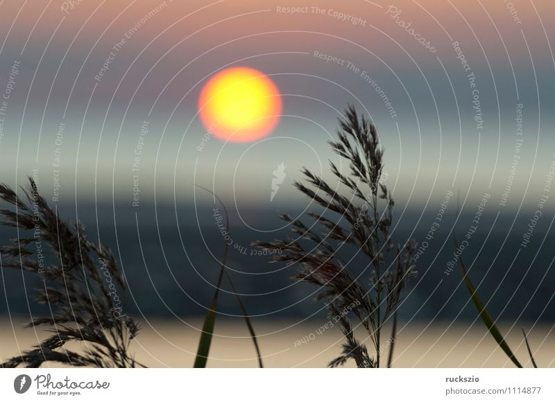 Sunset, grass, reed, siluette, sunset, Ocean Landscape Water Clouds Grass North Sea Red Moody Common Reed Dusk Celestial bodies and the universe Sky Impression