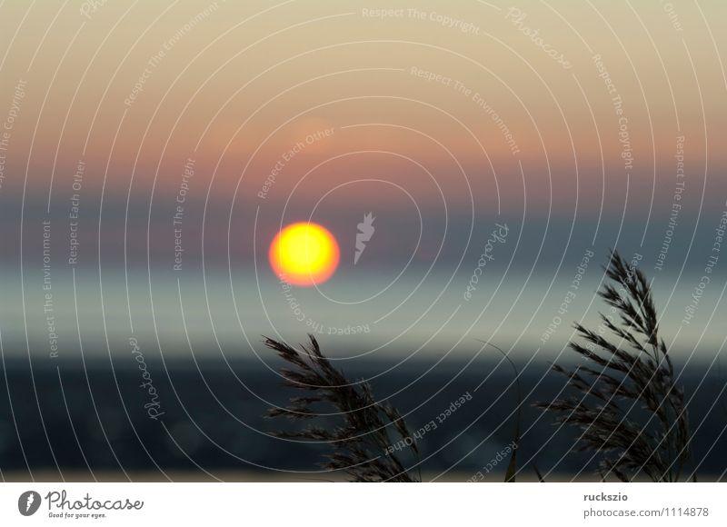 Sunset, grass, reed, siluette, sunset, Beach Ocean Landscape Water Sky Sunrise Sunlight Summer Grass Lake Yellow Orange Red Moody Common Reed Dusk Impression