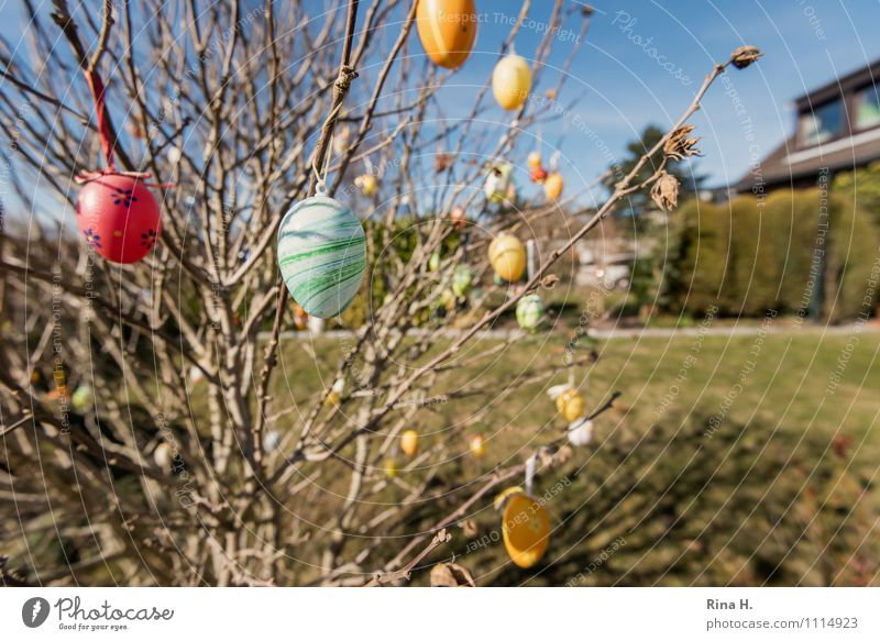 Custom Easter Spring Beautiful weather Bushes Garden Meadow Multicoloured Spring fever Anticipation Easter egg Tradition Ritual Colour photo Exterior shot