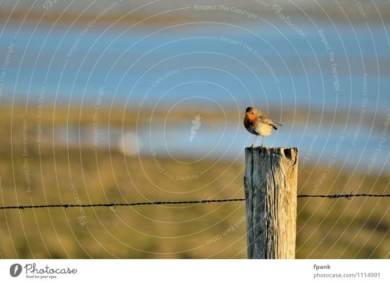 """Unexpected fence post occupation Animal Wild animal Bird """"Robin Singvogel"""" 1 """"Wire Barbed wire Fence"""" Wood Small Colour photo Exterior shot Day Sunlight"""