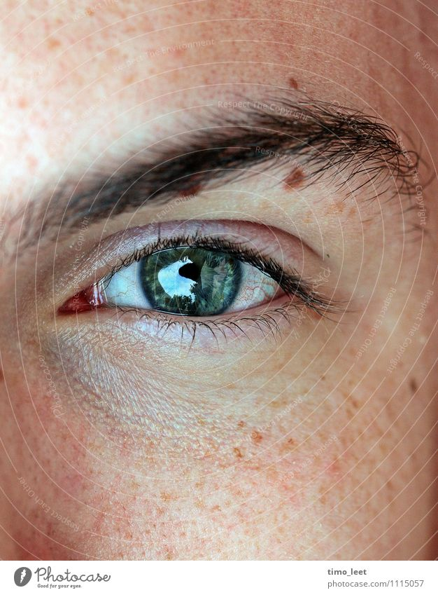 See right through me! Human being Masculine Young man Youth (Young adults) Head Eyes 1 18 - 30 years Adults Glittering Looking Authentic Near Natural Secrecy