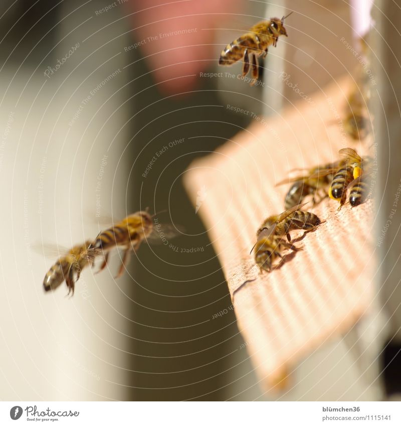 Healthy Eating Animal Movement Natural Small Flying Work and employment Wild animal Esthetic Speed Trip Joie de vivre (Vitality) Attachment Insect Bee Teamwork