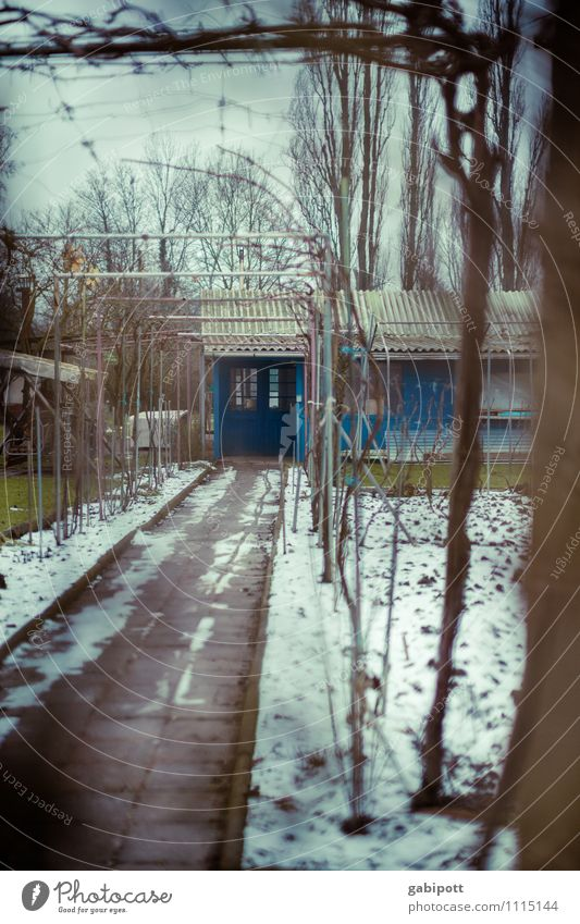 Nature Blue Plant House (Residential Structure) Winter Window Meadow Lanes & trails Garden Brown Moody Leisure and hobbies Living or residing Earth Door