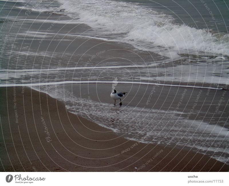sea1 Ocean Seagull Beach Sand