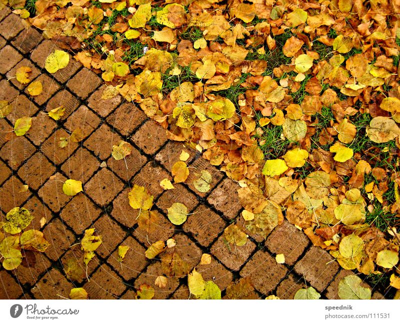 Green Red Plant Leaf Landscape Yellow Meadow Cold Autumn Warmth Stone Garden Park Gold Dangerous Threat