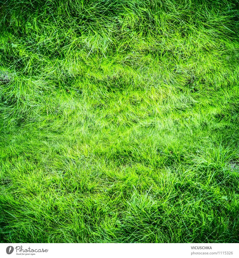 Nature Green Summer Joy Dye Meadow Spring Grass Playing Background picture Garden Lifestyle Park Leisure and hobbies Field Design