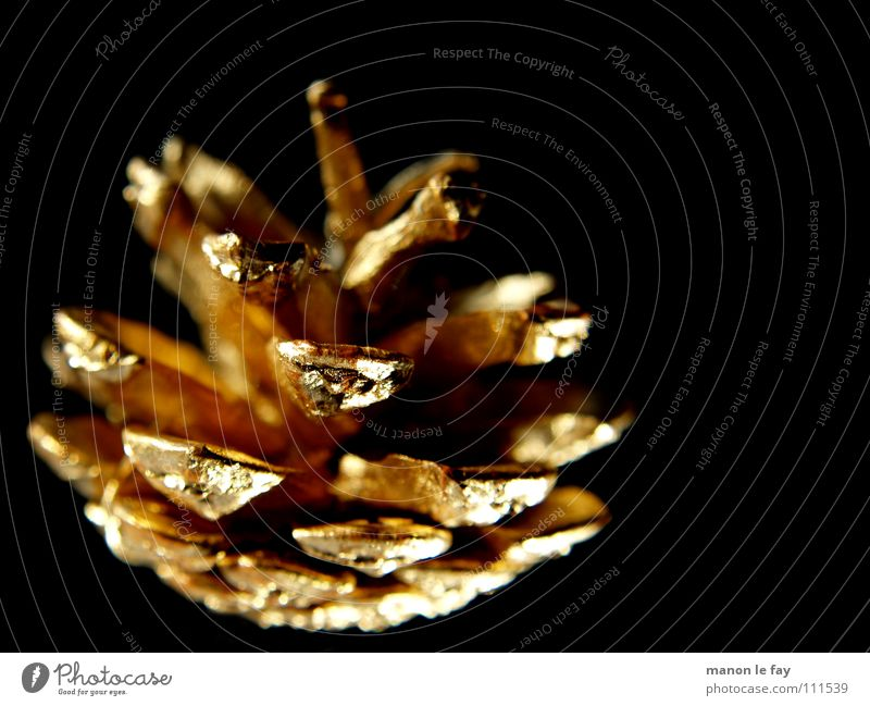 Nature Christmas & Advent Black Glittering Gold Public Holiday Fir cone