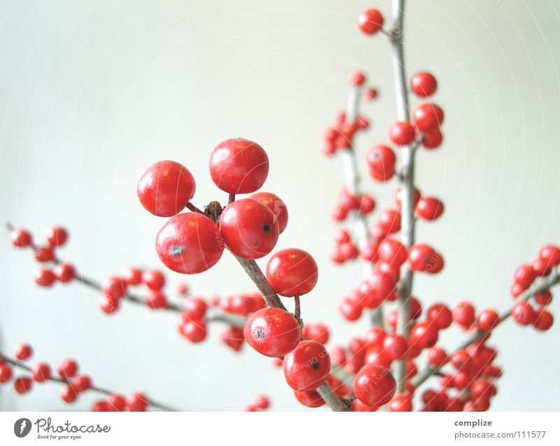 The Red Berries Fruit Style Beautiful Winter Living or residing Flat (apartment) Arrange Interior design Decoration Art Plant Autumn Flower Bushes Sphere Round