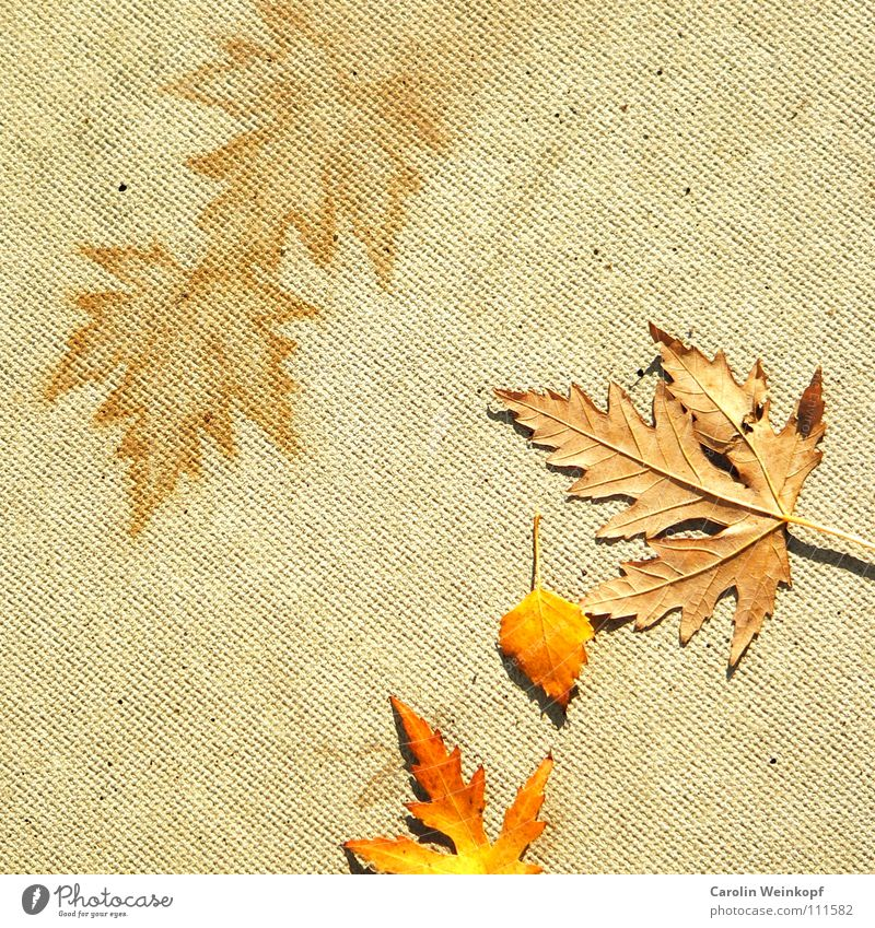 Red Leaf Yellow Autumn Bright Orange Concrete Floor covering Transience Decline Symbols and metaphors Beautiful weather Beige November December October