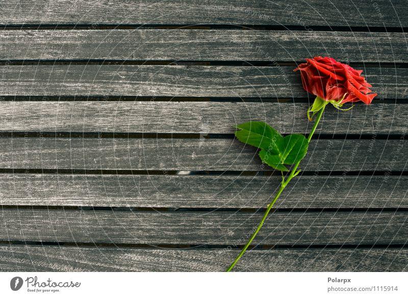 Red rose Nature Old Flower Red Love Feminine Design Table Romance Retro Tile Material Story Desk Wallpaper Pine