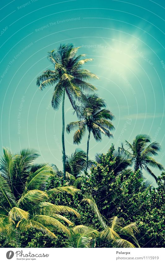 Palm trees Sky Nature Vacation & Travel Blue Plant Green Summer Sun Tree Relaxation Leaf Landscape Beach Forest Yellow Warmth