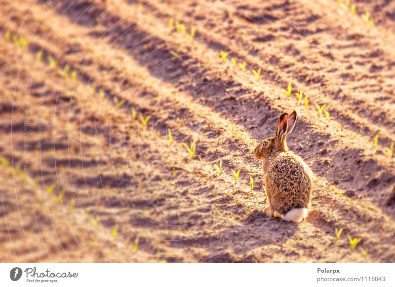 Hare on a field Happy Beautiful Face Summer Garden Kitchen Easter Woman Adults Nature Animal Grass Meadow Fur coat Pet Paw Large Small Cute Clean Wild Brown