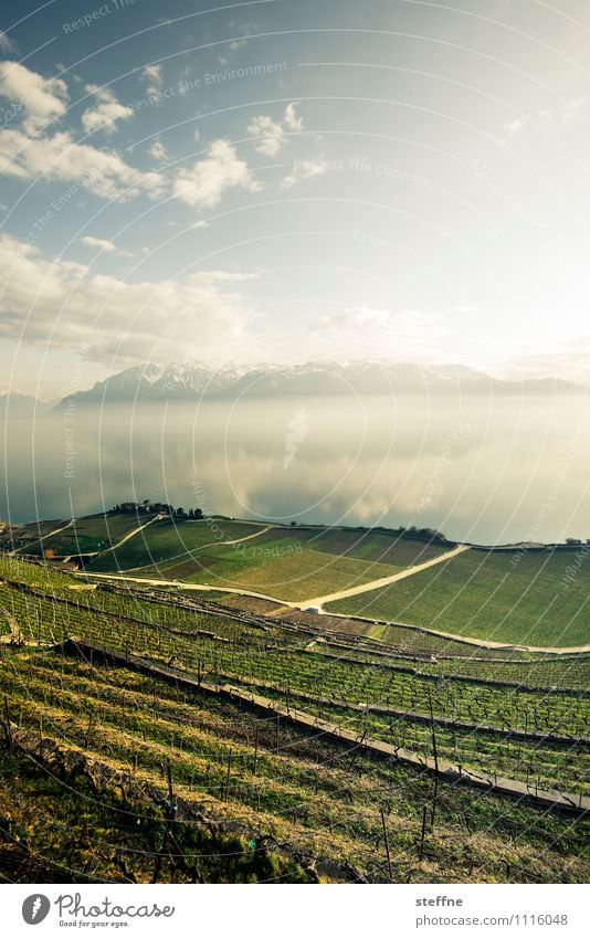 recreation Nature Landscape Sky Sunlight Spring Beautiful weather Mountain Alps Lake Lake Geneva Lausanne Switzerland Vacation & Travel Relaxation Vineyard Wine