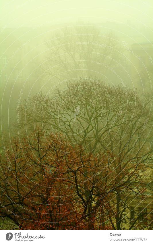 Tree Autumn Fog Branch Treetop Smog Friedrichshain Gymnasium