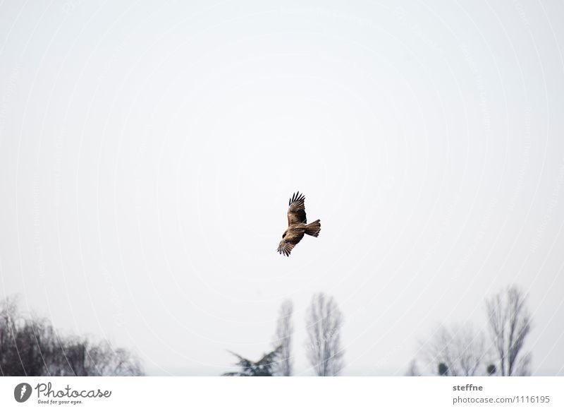Animal well: Surveillance from the air Air Spring Tree Bird 1 Observe Hunting Monitoring Bird of prey Hawk Hunting grounds Wing Colour photo Exterior shot