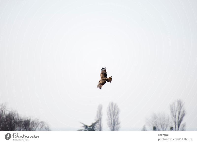 Tree Animal Spring Bird Air Wing Observe Hunting Bird of prey Monitoring Hawk Hunting grounds