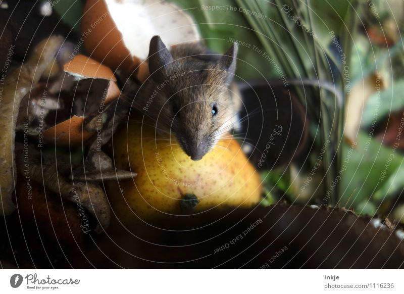 Animal Emotions Eating Small Garden Contentment Wild animal Multiple Nutrition Cute Curiosity Animal face To feed Mouse Disgust Banquet