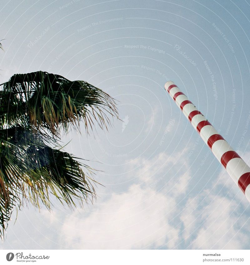 New Eco Palm tree Clouds South Broadcasting tower Stripe Leaf Red Fir tree Waves Visible Surveillance Microwave Cellphone Mobility Fantastic Stunt
