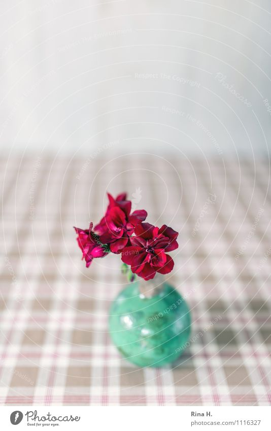 Geranium in green vase Vase Bright Green Red Turquoise Still Life Tablecloth Checkered Decoration Colour photo Interior shot Deserted Copy Space top