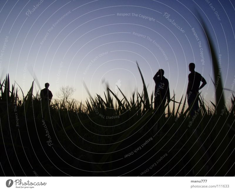 A Bugs View... Grass Human being Nature Meadow Dark Youth (Young adults) Silhouette nightsky standing bugsperspective