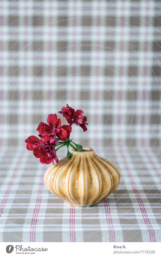 Flower Blossoming Still Life Checkered Tablecloth Vase Geranium
