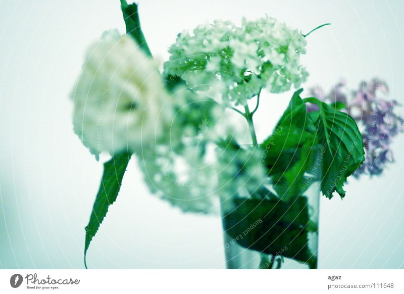 Water White Flower Green Blossom Spring Graffiti Room Germany Glass Fresh Europe Stand Violet Vase Lily plants